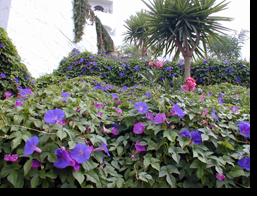 Blumen im Monica Isabel Beach Club in Albufeira
