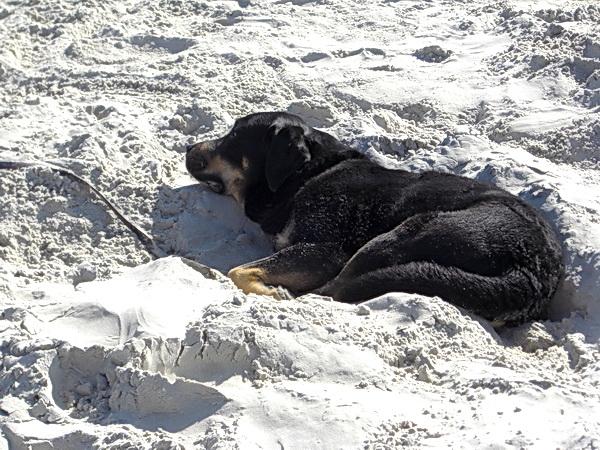 Ein Hund entspannt sich am Nordsee Strand