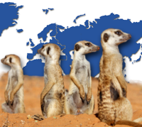 eine kleine Gruppe verstörter Erdmännchen vor einer Weltkarte