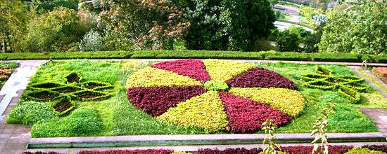 Blumenfoto aus dem Botanischen Garten auf Madeira