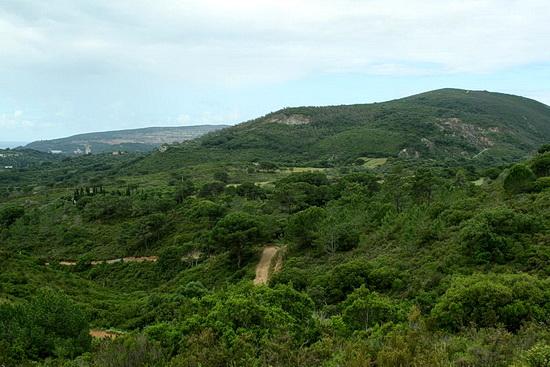 Foto der üppigen Vegetation in der Serra da Arrábida