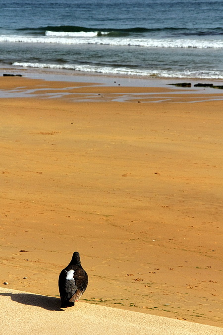 Foto des einsamen Strands von Carcavelos