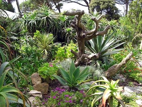 Ein Teil des wunderschönen Gartens bei der Bar Moinho Dom Quixote