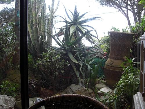 Blick aus einem der WIntergarten hinaus in den Garten