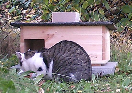 Eine Katze belauert das Igelhaus