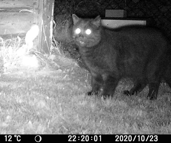 Nachtaufnahme einer Katze vor dem Igelhaus mit hell leuchtenden Augen