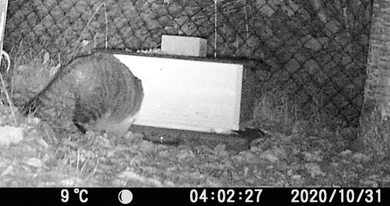 Foto einer Katze, die mit dem vorderen Körper im Igelhaus verschwunden ist